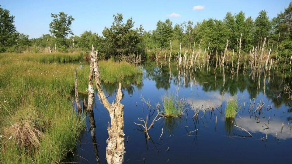 Bioökonomie-Projekt überzeugt WIR!-Jury